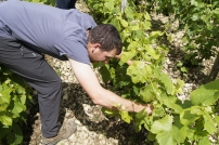 Thibault, le fils, a suivi un cursus agricole et oenologique, ici on travaille en famille