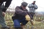 Joël Lecoq Poussard vin vigne viticulture domaine Rebourseau Anima Vinum escargot vigneron