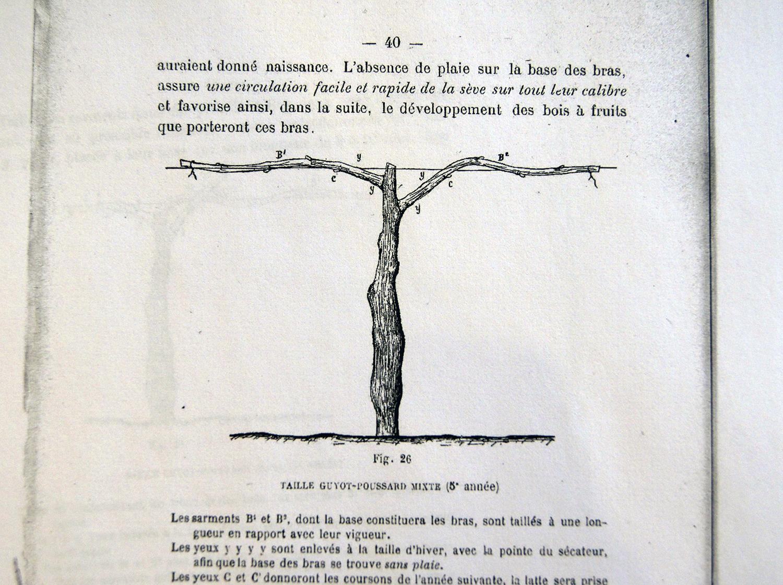 L'Apoplexie (de la vigne), par René LAFON (1921), ingénieur agricole
